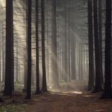 Martin Nonstatic - Walk Into The Soundforest