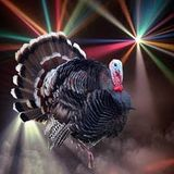 Thanksgiving day mix  THANK YOU FOR LISTINING this is for you!