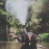 Aanti - In a Rainforest Mix