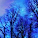 The AmAteur  --  BLUE TREES (14.05)