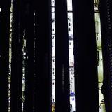 Shinkansen Dreams