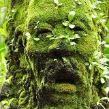 Green Dayze Part 2