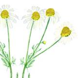 noble flower