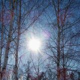 Winter Sunshine Mix