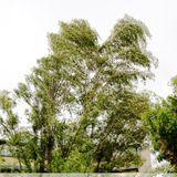 Biesentales Biesentales #21 - Wind bends tree 14.09.192019