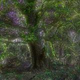 2014 Lysergic Tree's Set