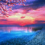 Ocean of Devotion