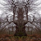New Psy Forest Set 2014: Visions of Shamanic Tree