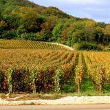 On parle mais il se fait tard #4 2/2 : La vigne, mon patrimoine