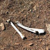 The Black Horseman – Dust And Bones