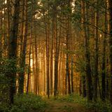 ReoR - Forest Chill (salmz rmx)