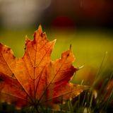 Autumn made
