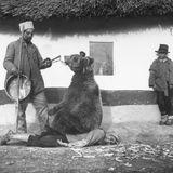 """Радиотеатър   """"История за мечката Сара, циганина Руси, локомотива и Млечния път"""" на Людмил Станев"""