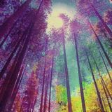 Colors of Autumn-Mix 10.2013