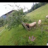 2016 August 5th - In den Bergen
