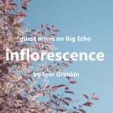 inflorescence - Guestmix for Bigecho.ru (by Igor Grankin)