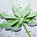 HELLHOMEMIX DONT GET YOUR WEED WET!