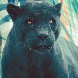 Jungle Hunter :   The AWOL Dubplates - 95 Jungle & DnB
