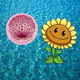 Serotonine - Funflower
