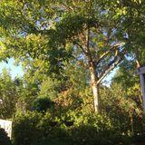Backyard Mix