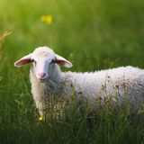 The LORD God Is A Good Shepherd (A Psalm 23 Meditation)- Clint Byars