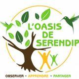 Podcast // Rendez-Vous à l'Oasis de Serendip.