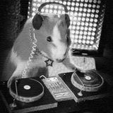Dark Hamster