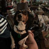 Dog Bites Girl @ The Lot Radio 09-09-2019