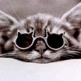 Zenebou world - si on parlait de chats  !