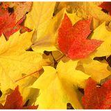 Leaves on the Floor