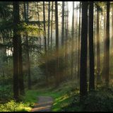 A Winding Path Through the Woods 072: PsyChill