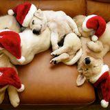 "HYPEHITTERS""CHRISTMAS EDITION :SEASONS GREETINGS"