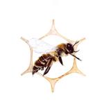 June Pollinate Part II