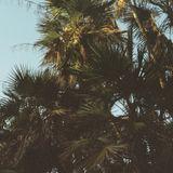 Podcast #31 - Au bord du soleil
