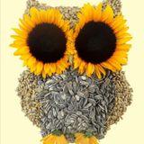The Sun Seeds // idk (07/05/18) @ Amateur Radio