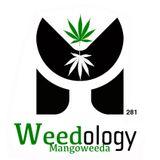 MANGO WEEDA Xclusive Mix x Mixology