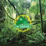 Intro Jungle Fever
