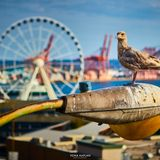 Ferris-wheel groove