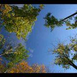 kojotte chillout zone - Chillout Mix 1