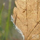 Low Light Mixes – Illusions of Autumn