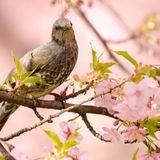 Birds Soft Techno Session (58 min) @ Dj.Lan 26-8-13