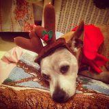 """Christmas 2014 - Mix #10 - Christmas """"A to Z"""""""