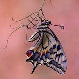 Butterfly Oneirology
