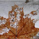 Autumn lends me an ear II : Decay of the leaf