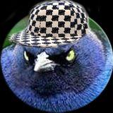 Dirty Birdz Flock To Seattle (8Mar2013)