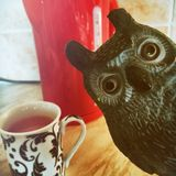 Tracy the MORNING owl