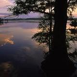 Woodland Nightfall Natural Sounds