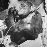 Monkey ( The Rasta One )