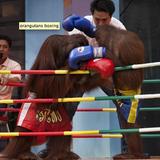 MonkeyTimeRadioHour_19-Sept-2012