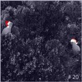 RGB Audio podcast #20  (2Thirds)